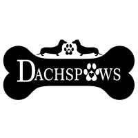 DachPaws at The Vet Expo Africa 2020